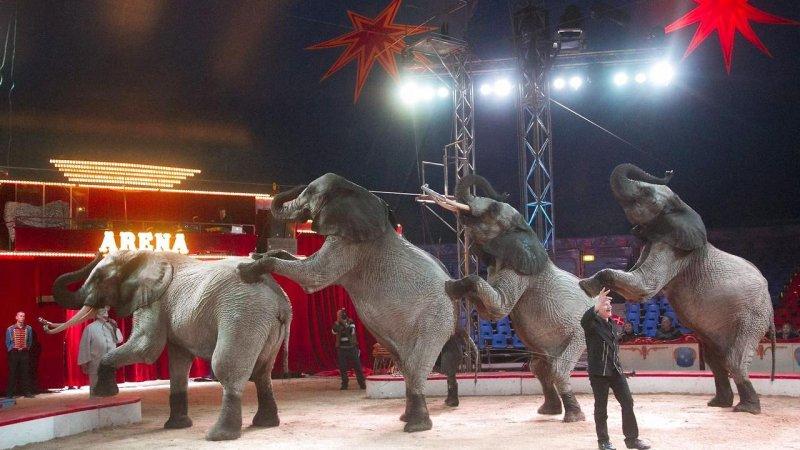 Arkivfoto fra Cirkus Arena. Foto: Kim Haugaard