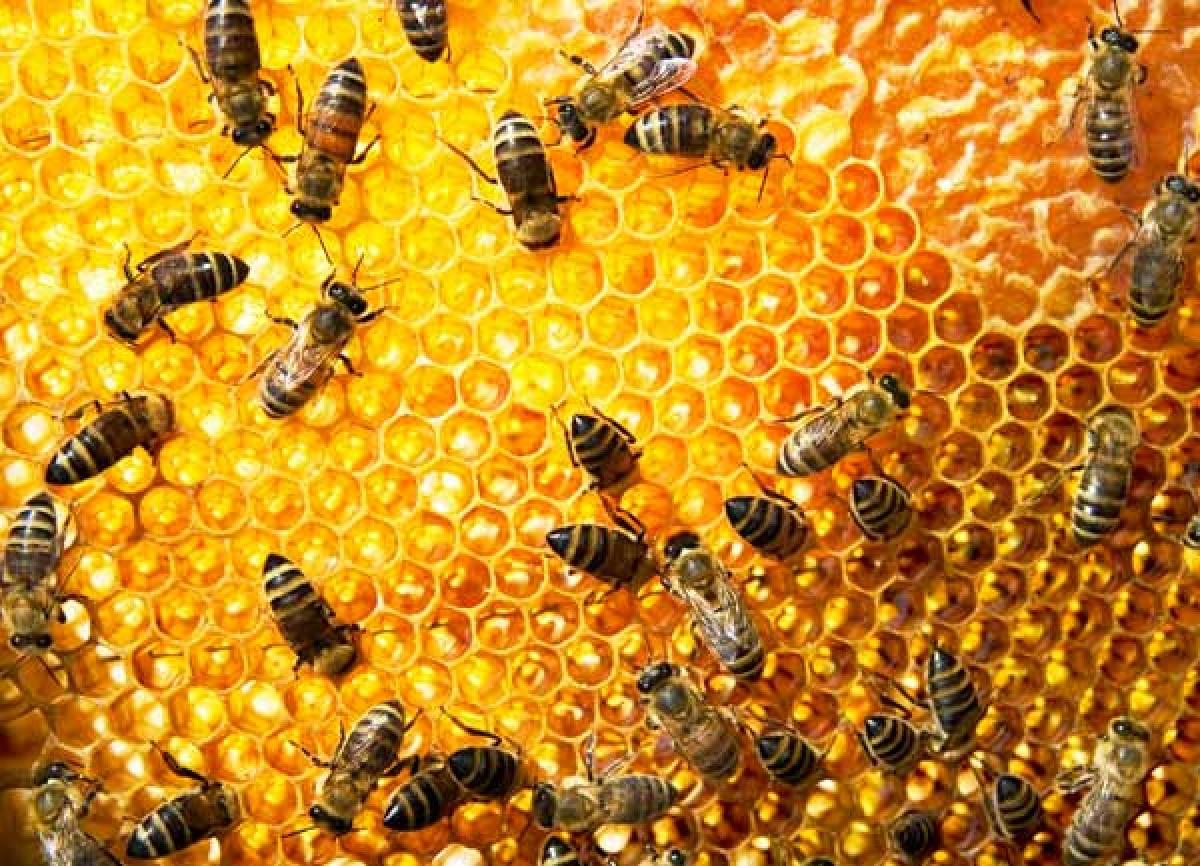 hvorfor laver bier honning