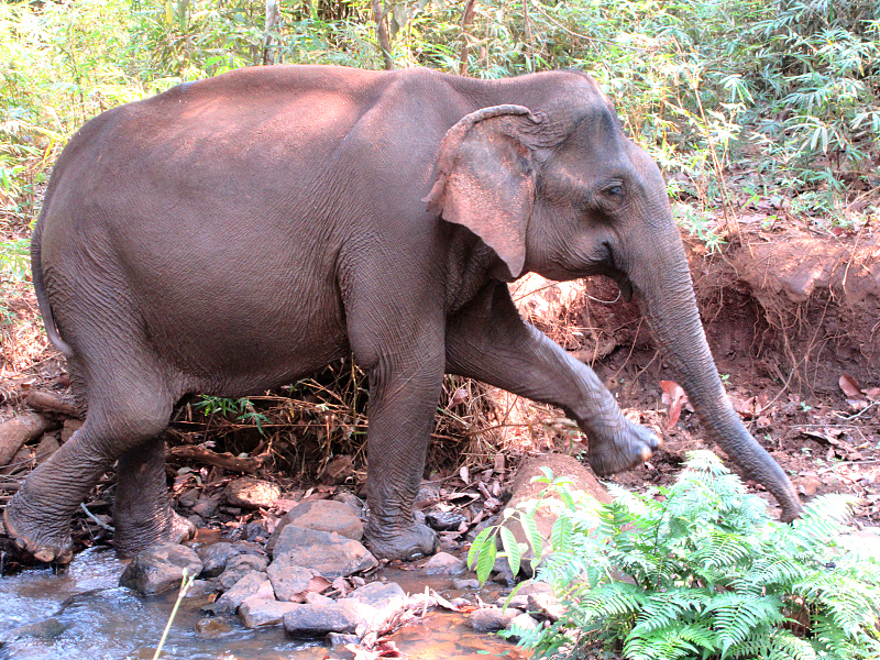 Smuk elefantpige hos Elephant Valley Project <3