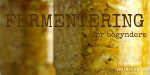 Fermentering for begyndere